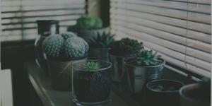 6 plantas medicinales con las que envenenar a nuestros personajes